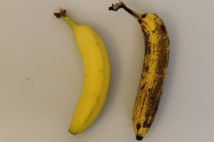 Banana comparison: The left banana is my preferred state of ripeness for eating out-of-hand. In fact, it's almost too ripe for me at this stage. The one on the right is way too ripe for me to eat, but, it's perfect for the sandwich.