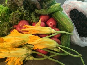 My Boggy Creek Purchases: squash blossoms, new potatoes, Maria's Mix, curly mustard greens, cucumbers, dewberries