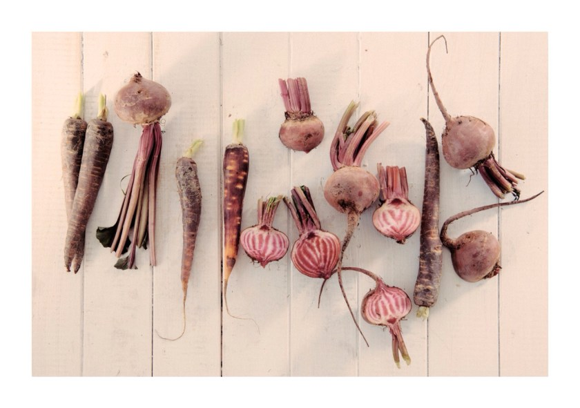 Food styling - beets and carrots