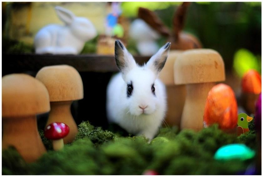 Bunny emerging