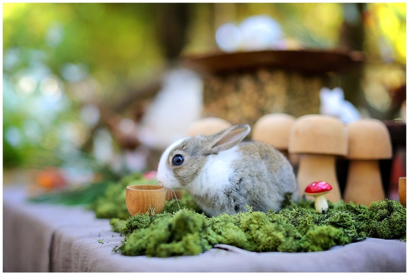 Bunny on Table