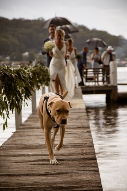 dog with bride and groom at sydney wedding
