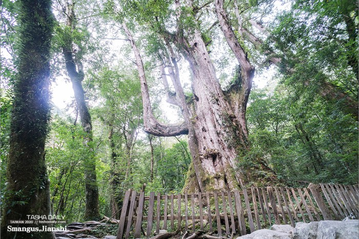 尖石旅遊︱遠得要命、上帝的部落.值得一訪的司馬庫斯