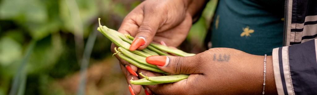 Bonen oogsten - Bloei en Groei - Kijkje in de korte keten