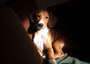 marsa's dog news