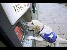 assistance dog help