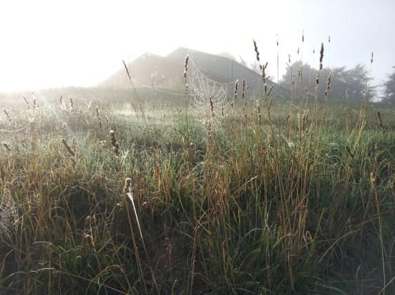 Fog makes spider webs look magical