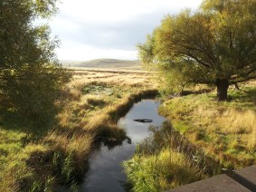 My favourite creek