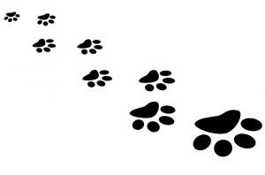 Koira ei pysty viestimään sanoilla, vaan käyttää viestinnässään eleitä.  Opettelemalla tunnistamaan koirasi rauhoittavat signaalit voit oppia ymmärtämään koiraasi paremmin.