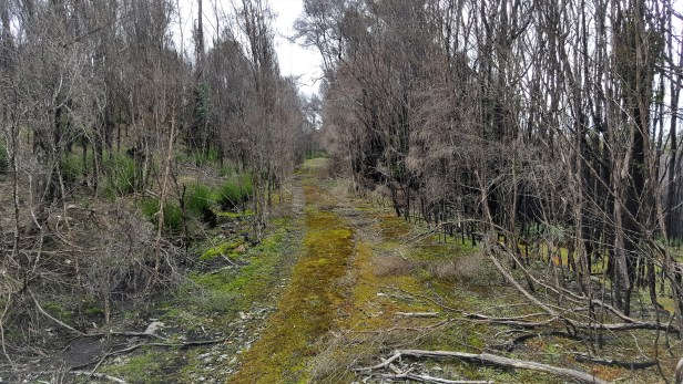 clearing-track