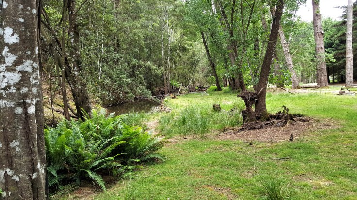 oldina-forest-reserve-2