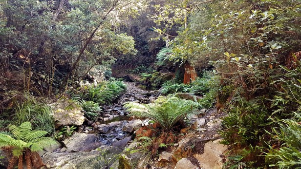 Holwell Gorge 1