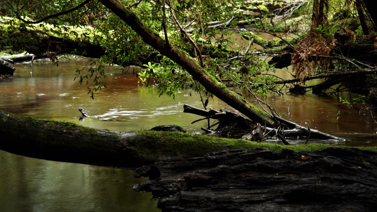 John Lynch Creek