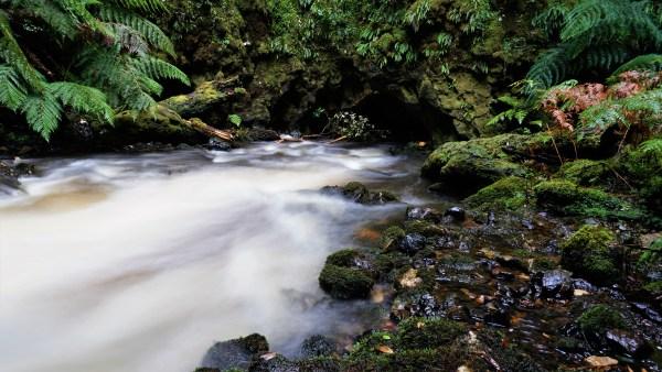 Swallet 1 - Julius River Swallet