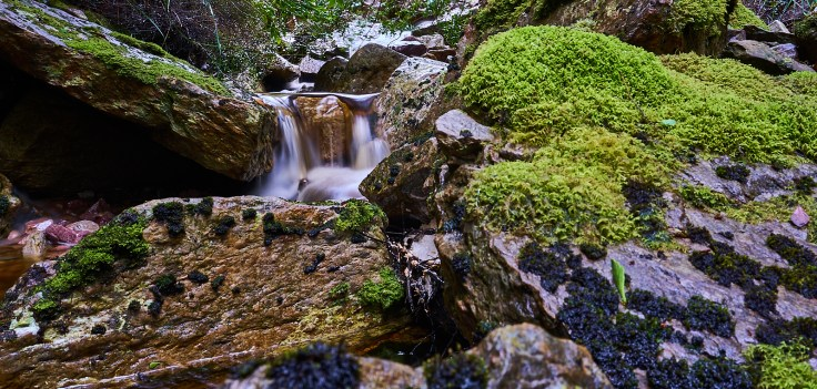 Devonport creek 1