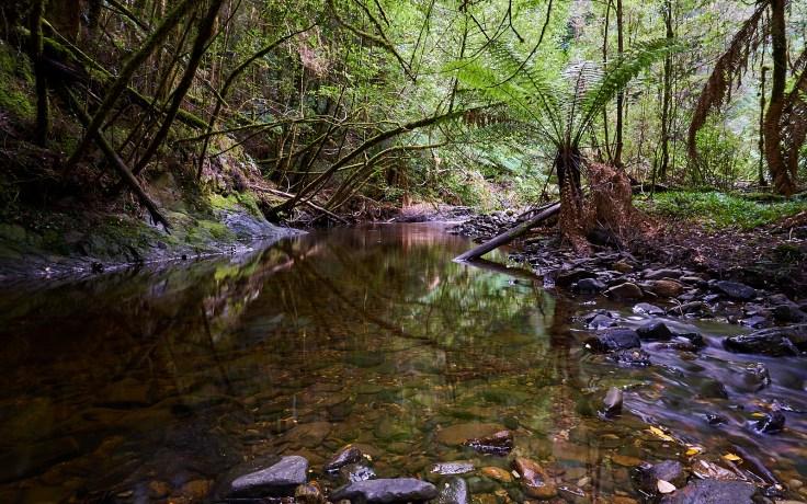 19 Mile Creek 1