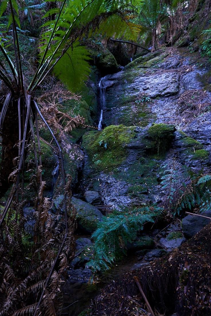 Campbells Rivulet Falls 1 1