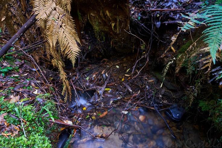 Cashions Creek Cave Inflow 1