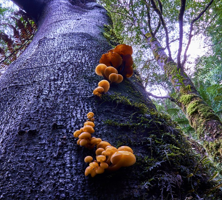 Tree fungi 1