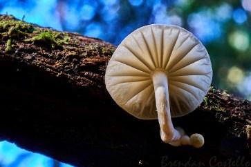 White Fungi 1