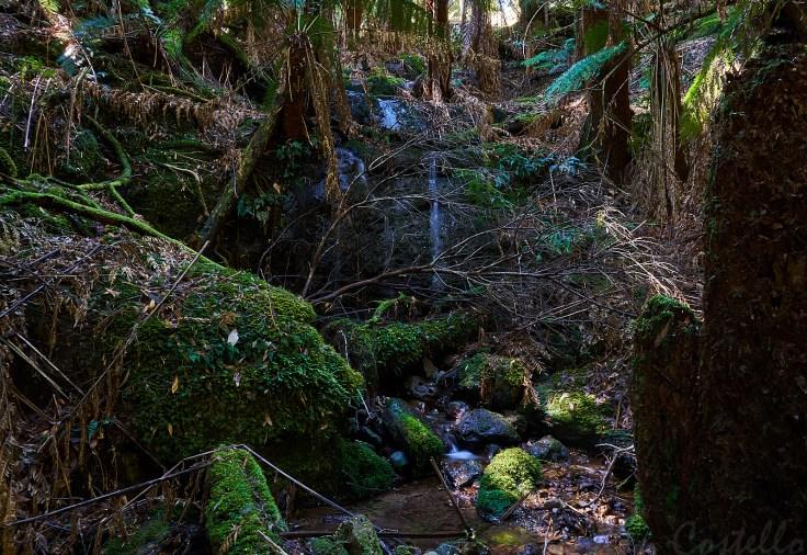 First waterfall 1
