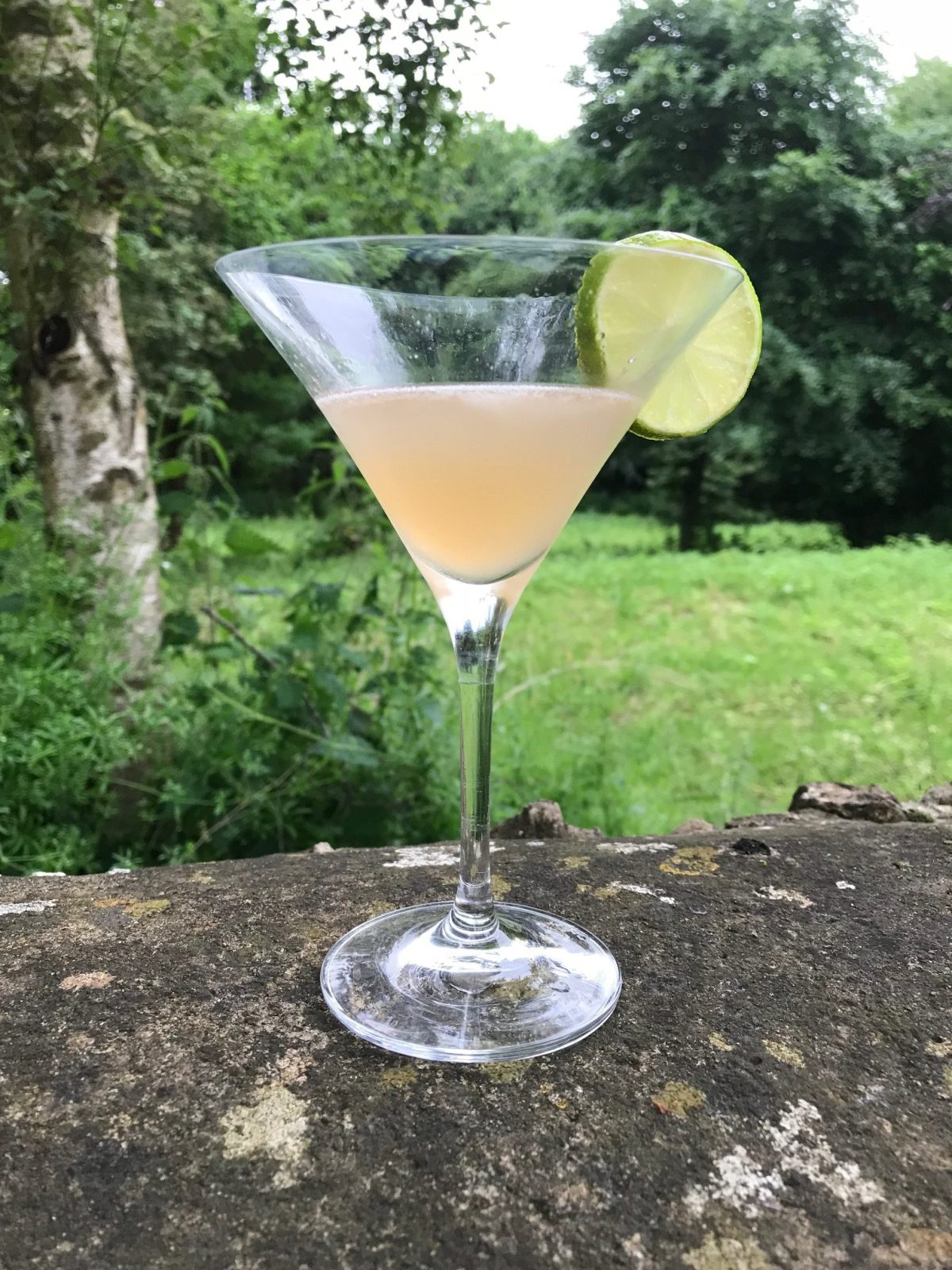 Rhubarb Gin Cocktails