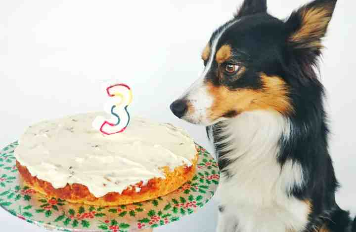 Every Dog Has His Day – A Pooch Birthday Cake Recipe