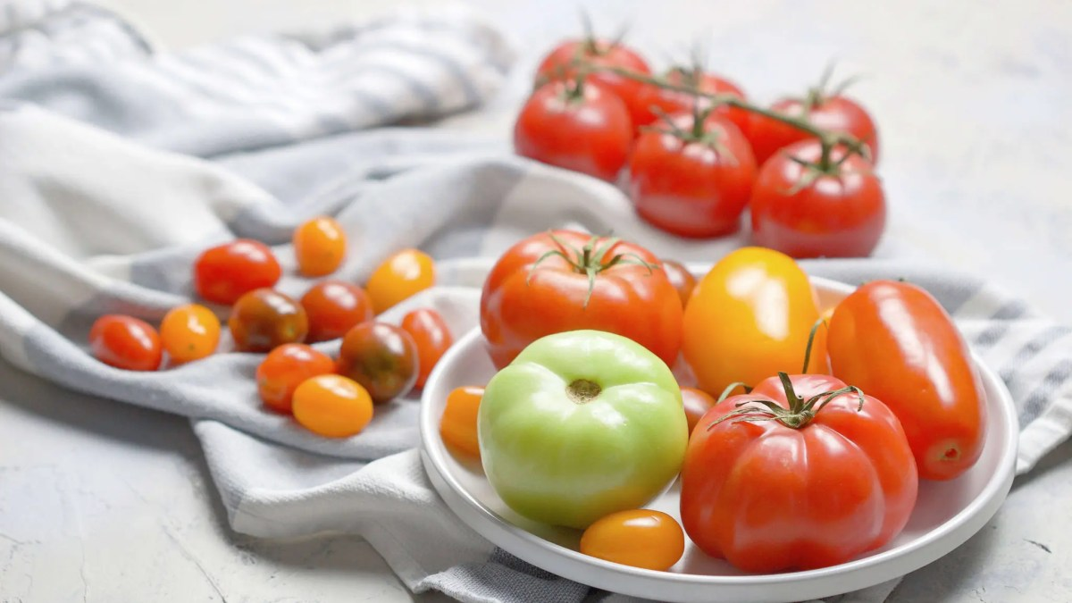 All you need to know about tomatoes? Health benefits, facts, the best Marinara Sauce
