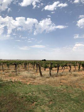 Pheasant Ridge Winery