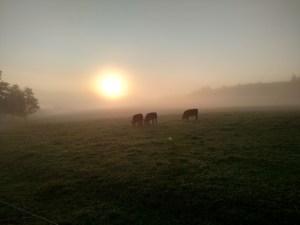 Pennsylvania countryside,#1