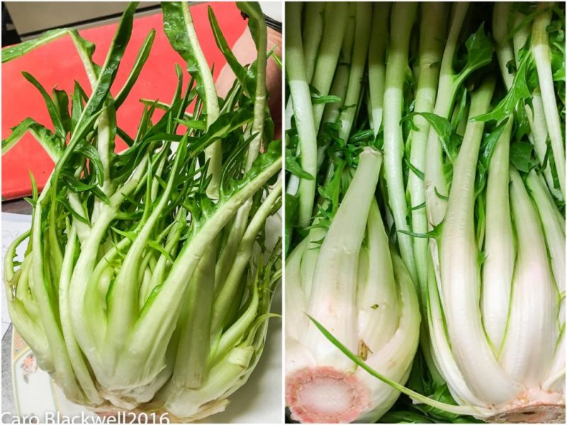 Puntarelle - A member of the Chicory family