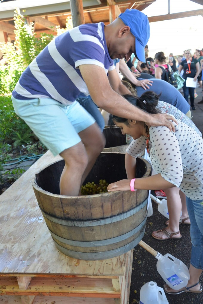 Grape Stomp Festival Willamette Valley
