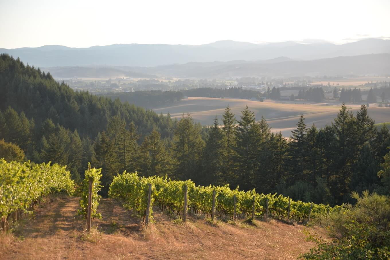 Roots Wine Company View