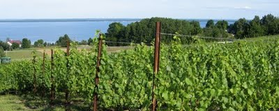 michigan wine, tastingroomconfidential.com