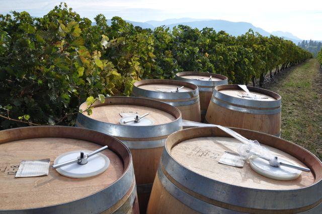 fresh barrels