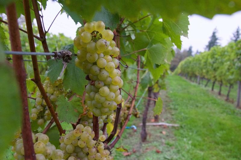 township 7 grapes