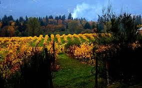 Cowichan Valley in the Fall