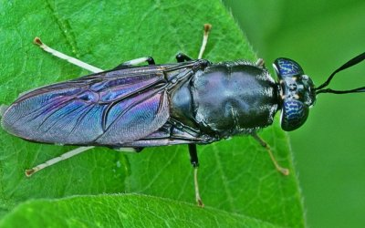Insects – The Potential to transform the animal feed sector