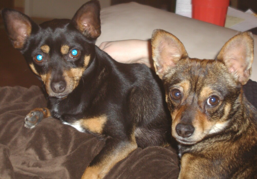 Rocky (on the left), and Jack