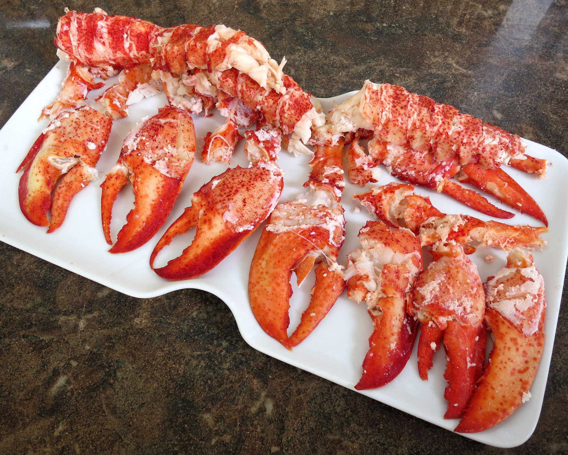 Lobster Rolls 103: Connecticut, New England and Maine Style – Tasty Island