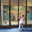 Polar Bar @ Natural History Museum