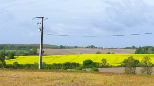 jaune pilone - Copie