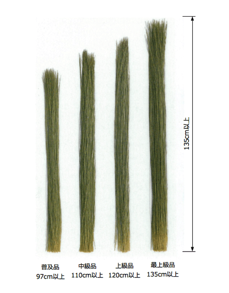 畳表に使わるイ草の長さ