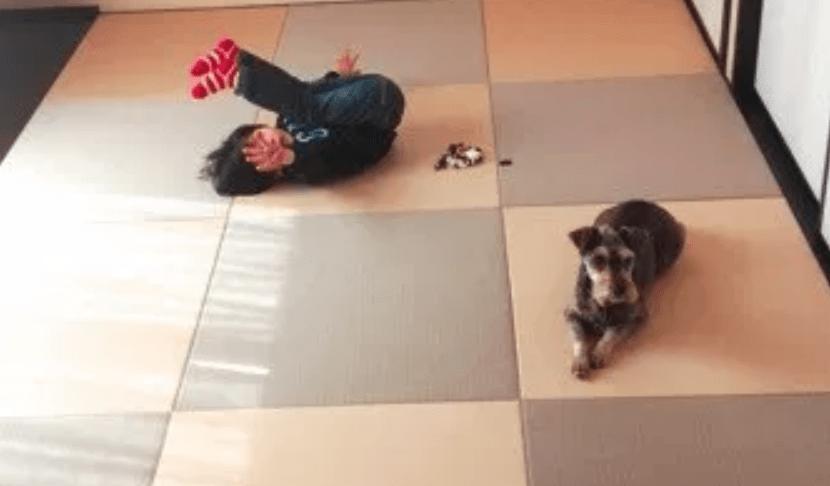 子供と犬と置き畳