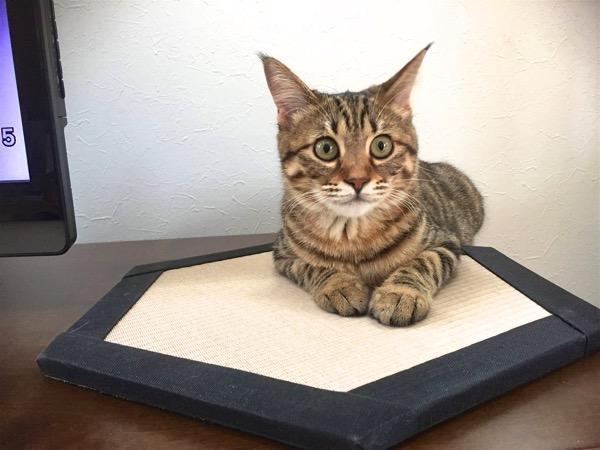 「猫の日」の畳グッズ