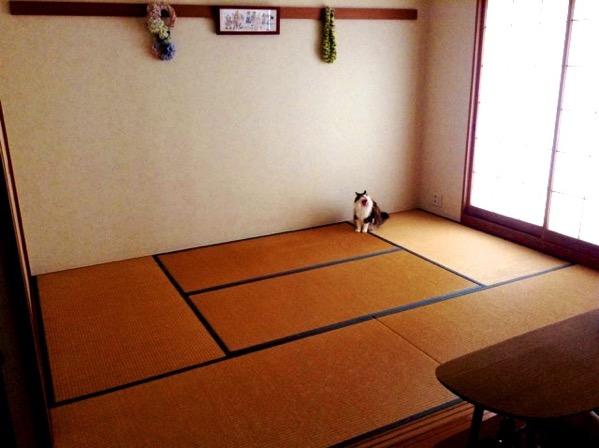和室の古い畳