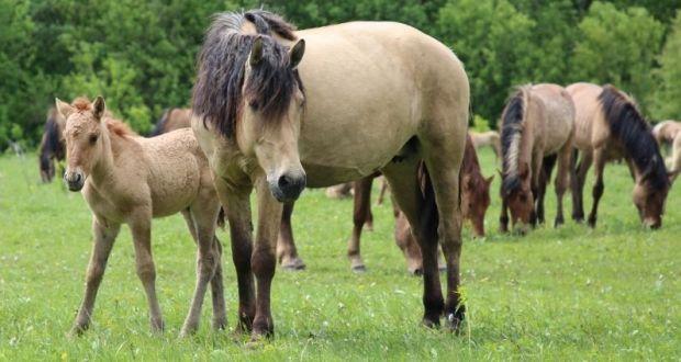 На разведение татарских лошадей хозяйствам республики выделят 5 млн рублей