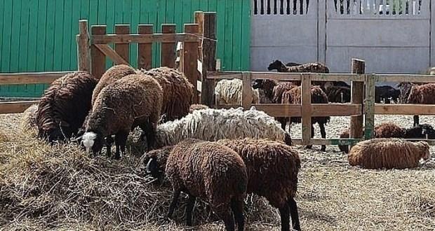 Духовное управление мусульман Тюменской области определило места для закупки и заклания жертвенных животных
