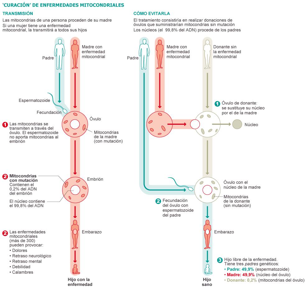 técnica de reproduccion asistida que sustituye las mitocondrias