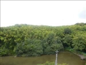 京都府向日市リノベーション裏の池-伊吹さま邸「たてコデ」